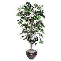Artificial Plants & Trees